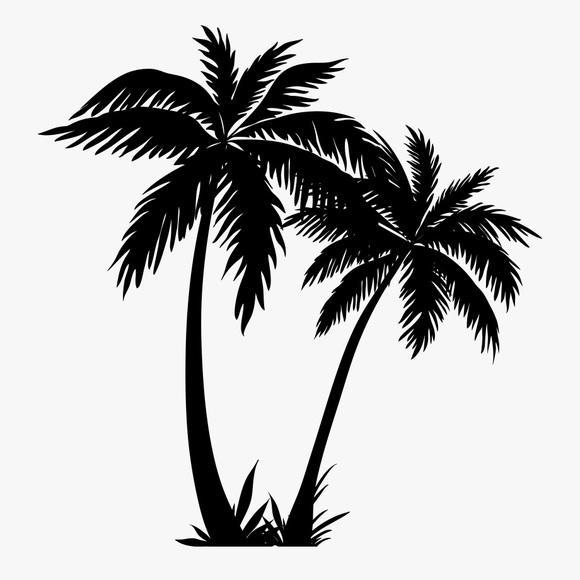 palmbeacher561
